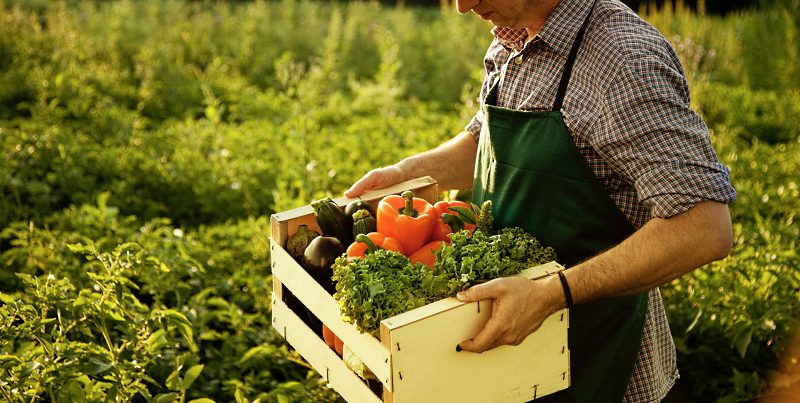 Agricoltura biologica: dalla Regione in arrivo finanziamenti per 2.5 milioni di euro