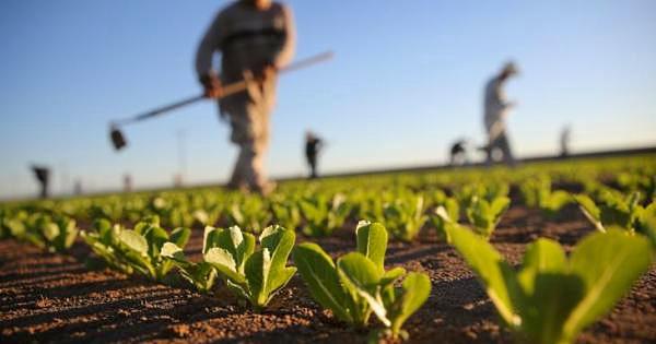 Aiuti a favore di aziende agricole e PMI colpite dalla crisi Covid-19: domande entro il 12 maggio