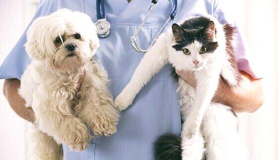 Benessere animale: sarà possibile curare gli animali con farmaci ad uso umano