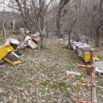 Orso affamato distrugge un apiario. L'incursione immortalata in un video