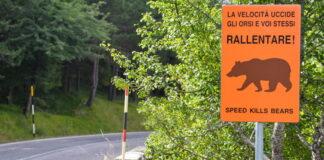 Strade attraversate dalla fauna selvatica, il PNALM installa dispositivi di sicurezza AVC PS