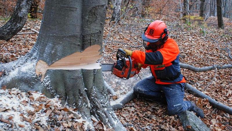 Corso gratuito di formazione per istruttore forestale. Per l'Abruzzo disponibili 4 posti