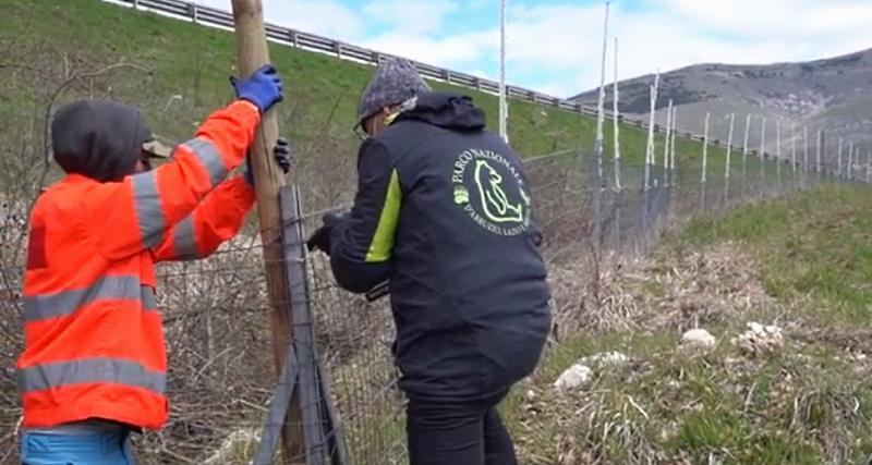 Recinzione elettrificata lungo l'Autostrada dei Parchi. Il PNALM si attiva per proteggere orsi e umani