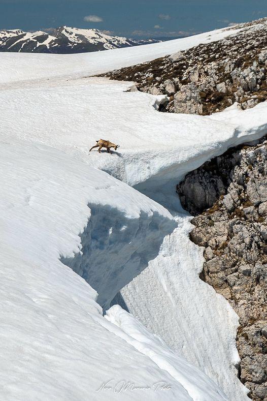 """Il camoscio """"curioso"""" nella Valle Lupara sul Monte Sirente"""