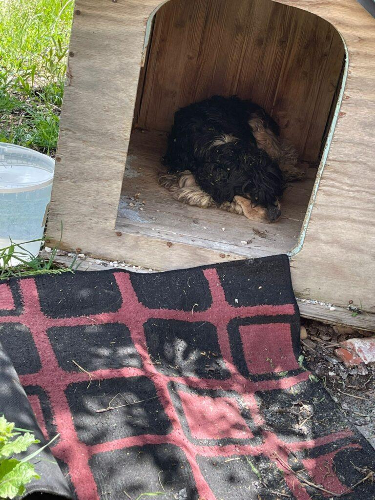 Il Sindaco Di Natale trova per strada un cagnolino abbandonato e in pessime condizioni fisiche, oggi lo visiterà un veterinario
