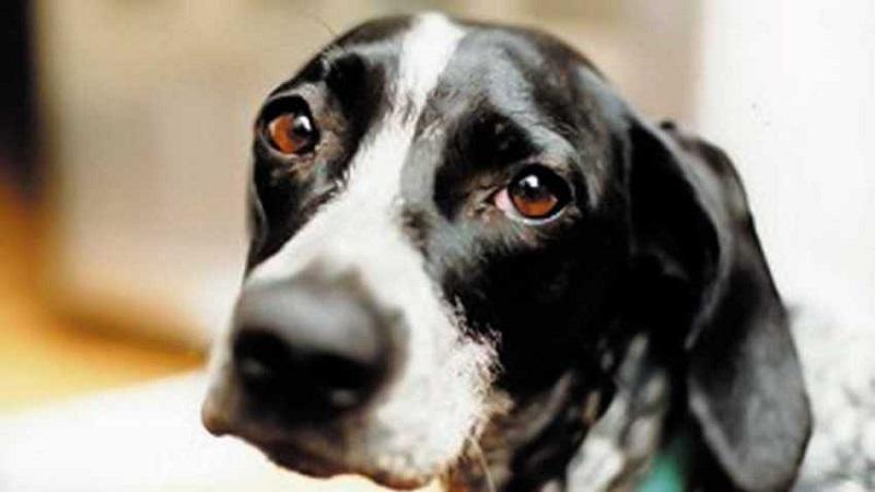 Aielli, al via la campagna contro l'abbandono e la mancata cura del proprio cane