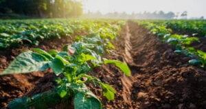 """Agricoltura, Imprudente incontra le associazioni di categoria: """"nuovo slancio attraverso promozione e valorizzazione"""""""