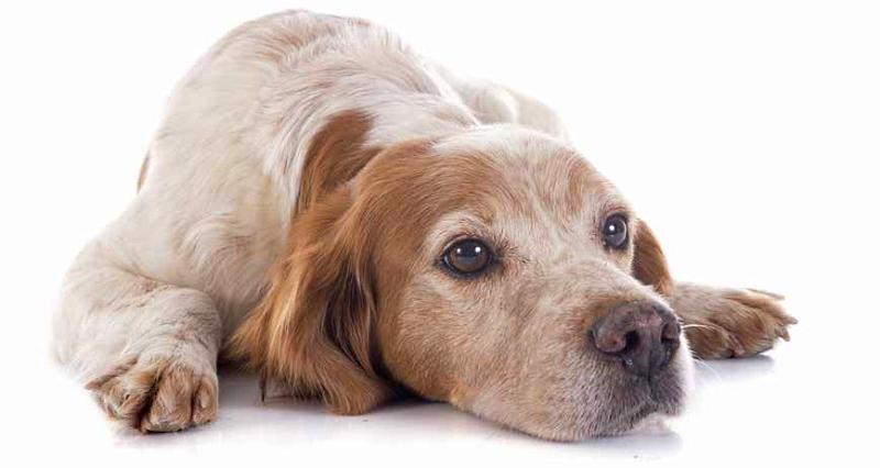 Pescina Comune a 4 zampe: giornata dedicata all'identificazione canina con apposizione di microchip