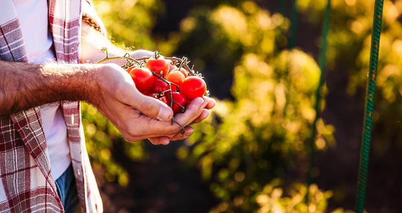 Incentivi all'agricoltura biologica: prorogata al 10 luglio la scadenza del bando regionale
