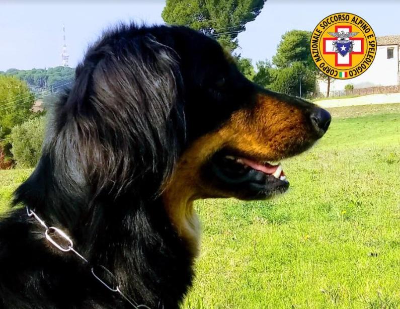 47enne anni disperso in Calabria: il soccorso alpino e speleologico d'Abruzzo invia il cane molecolare per le ricerche