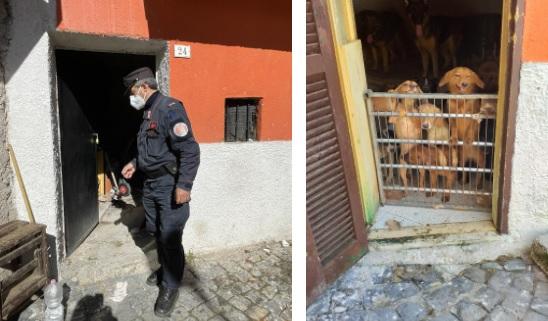 Indagini per rifiuti portano ad un allevamento di cani meticci