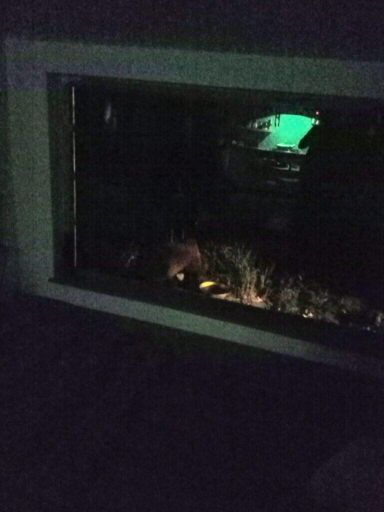 L'orso torna per la seconda volta nell'abitazione di Carrito, si attiva il PNALM con una recinzione elettrificata