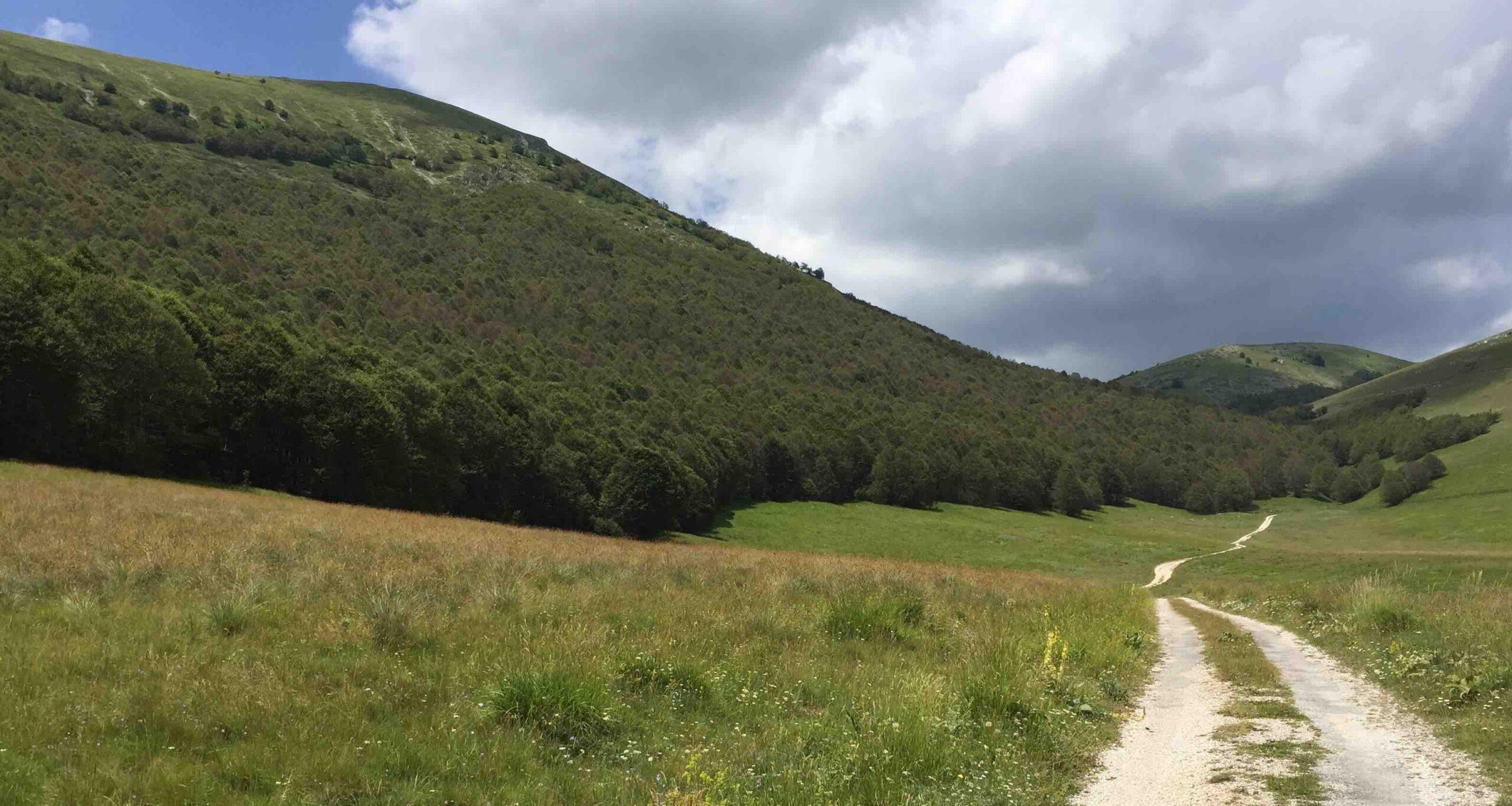 Regione e Parco Nazionale Abruzzo, Lazio e Molise per conservazione orso marsicano e implementazione ricettività diffusa
