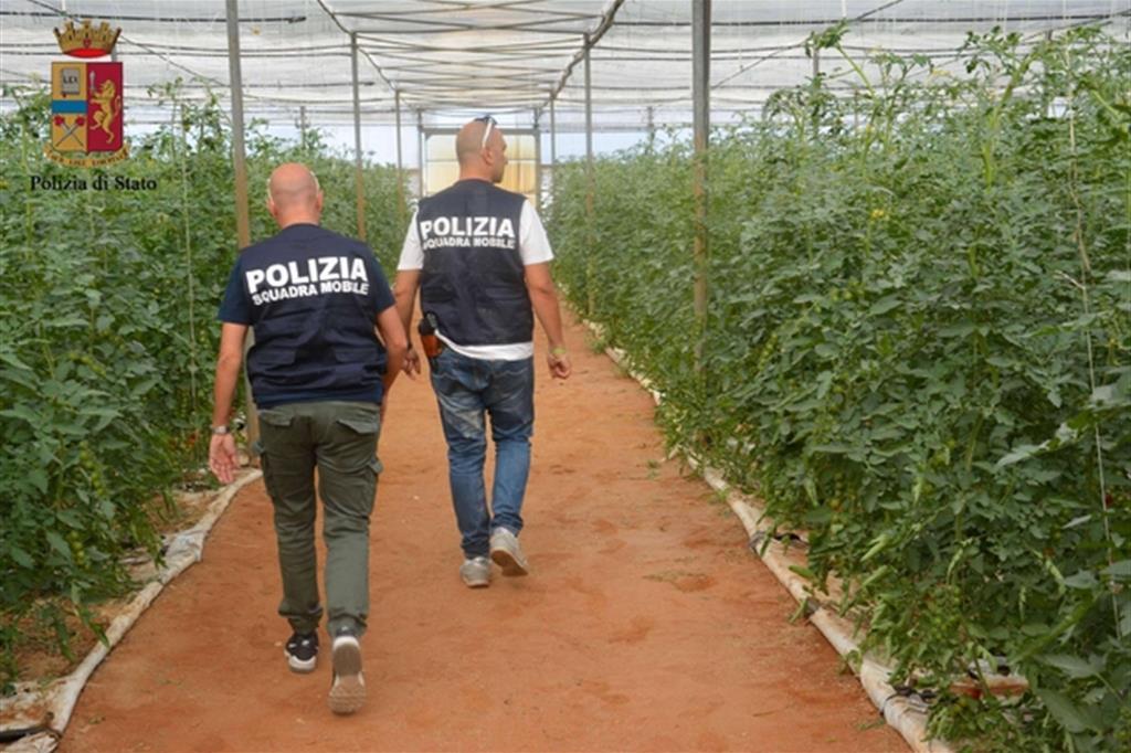 Contrasto allo sfruttamento dei lavoratori stranieri, controlli nelle aziende e braccianti agricoli nella piana del Fucino