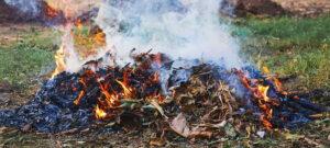Proprietari o possessori di aree incolte di Trasacco sono invitati a ripulire i loro terreni, giardini o cortili