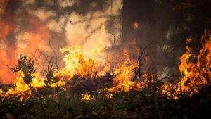 Pericolo incendi e inconvenienti igienico-sanitari: il Comune di Cappadocia ordina di ripulire i terreni