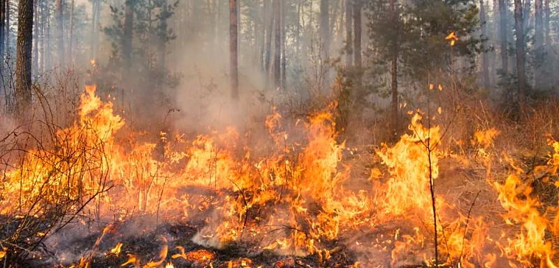 Rischio incendi boschivi, il Comune di Collelongo vieta l'accensione di fuochi fino al 30 settembre