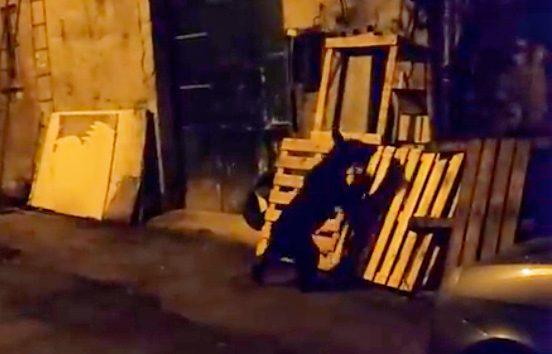 Orso in fuga per le vie del centro storico di Celano