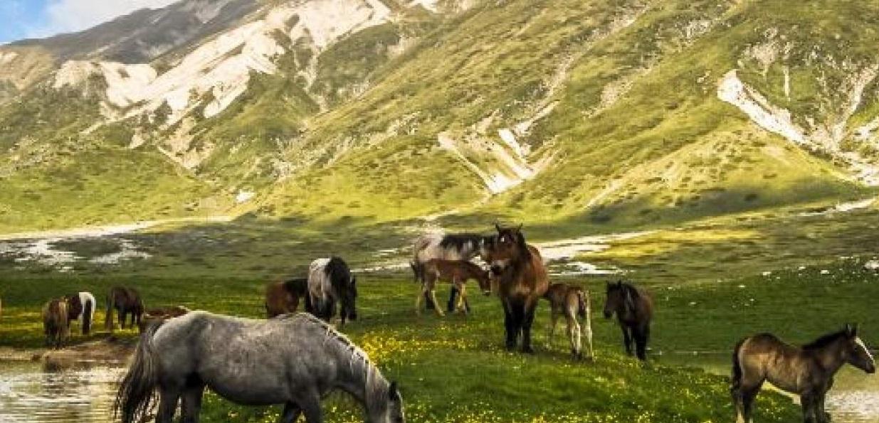 """Parco Sirente Velino, Fedele """"Mannaia del centrodestra che in Abruzzo ha deciso di tagliare 14 mila ettari del Parco"""""""