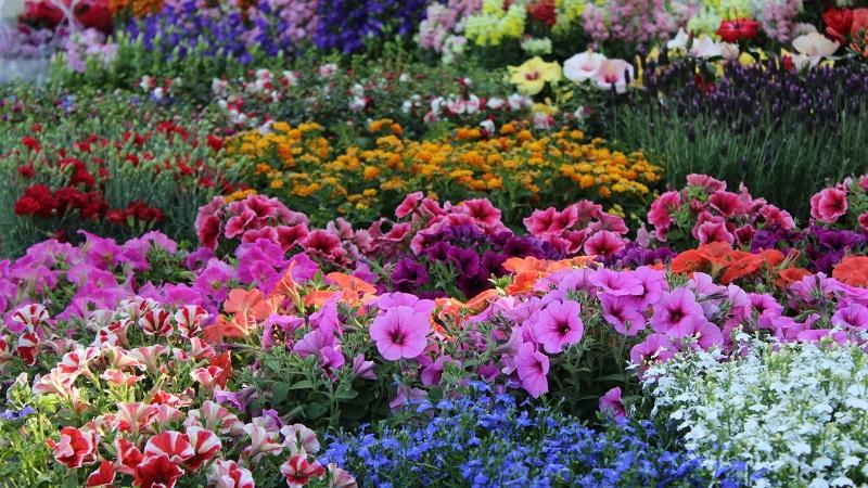 Torna a Sante Marie la Festa di fiori, colori e profumi