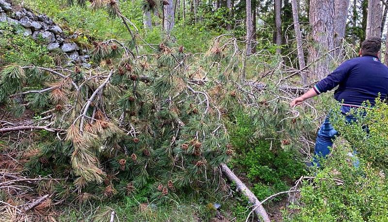 """Gravi danni alla Pineta di Tagliacozzo. NOPVC: """"c'è bisogno di un'opera forestale di bonifica importante"""""""