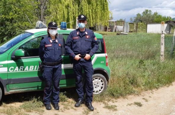 Carabinieri Forestali individuano un allevamento non autorizzato di Pitbull, nascosto tra le querce