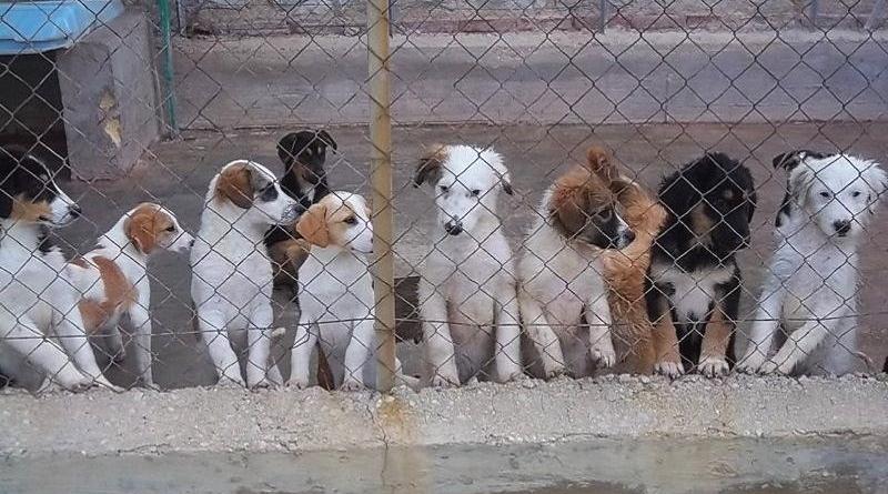 Rifugi per cani randagi: dal Viminale contributi ai Comuni. Soddisfazione della deputata abruzzese Daniela Torto