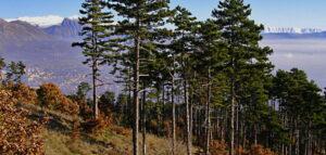Il Comune di Avezzano rimuove alberi e rami caduti lungo i sentieri della riserva naturale Monte Salviano