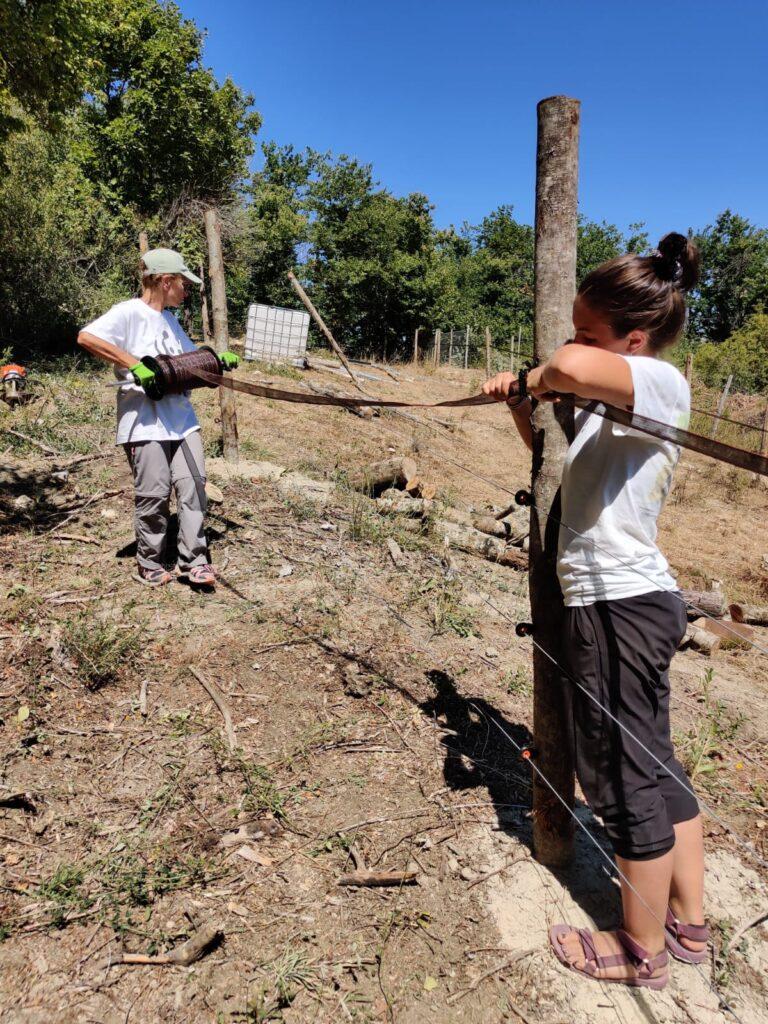 Installati 5 recinti elettrificati e 4 porte in ferro nelle aree frequentate da Amarena e dai suoi cuccioli