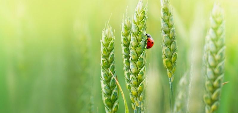 Sostegno all'agricoltura biologica, scadenza prorogata al 10 luglio per la presentazione delle domande