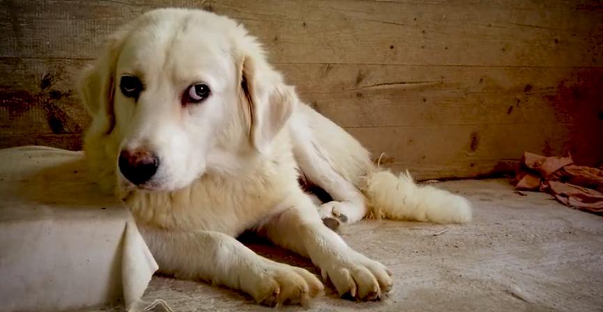 D'estate non abbandonare il tuo cane, il suo destino dipende da te