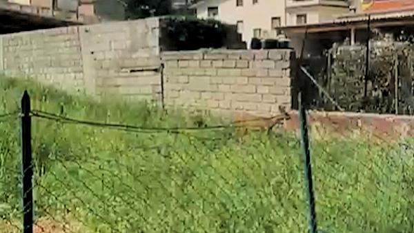 Capriolo nel centro abitato di Capistrello/video e foto