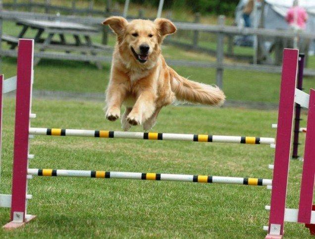 """Al via il """"Parco degli Amici"""", 4.100 metri quadrati per i cani nella zona nord di Avezzano"""