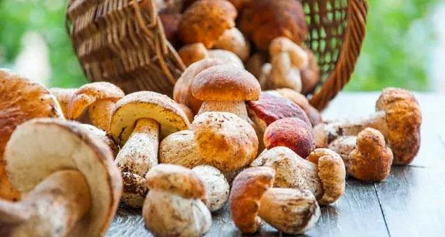 Controllo gratuito dei funghi spontanei raccolti dai cittadini da parte dell'Ispettorato Micologico