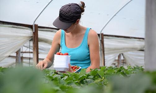 Più Impresa - Imprenditoria giovanile in agricoltura, contributi a fondo perduto fino al 35%