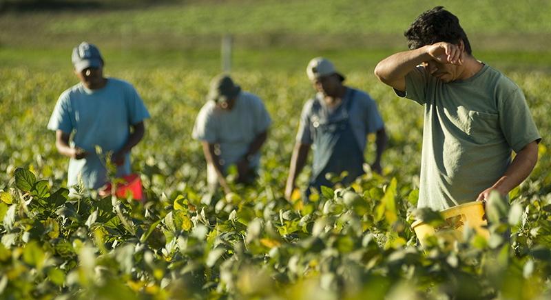 Protezione dei lavoratori agricoli stranieri: attivo anche in Abruzzo il progetto Sipla