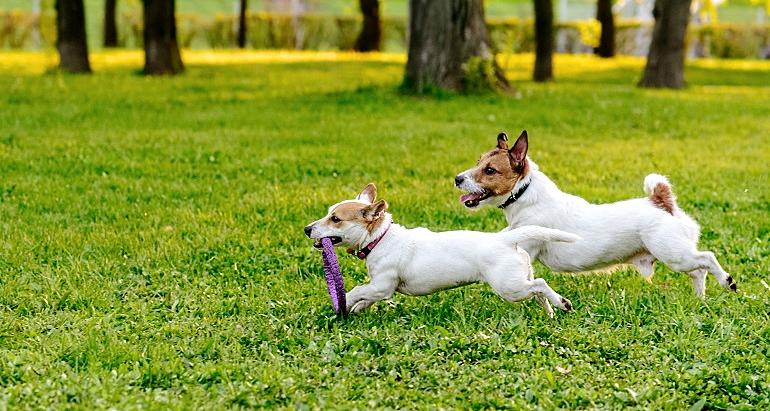 Parco degli amici: il Comune di Avezzano lavora al progetto di un'area attrezzata per i cani