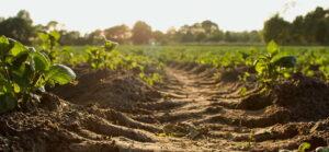 Opportunità per i giovani, 16 mila ettari di terreni all'asta con la Banca nazionale delle Terre Agricole Ismea