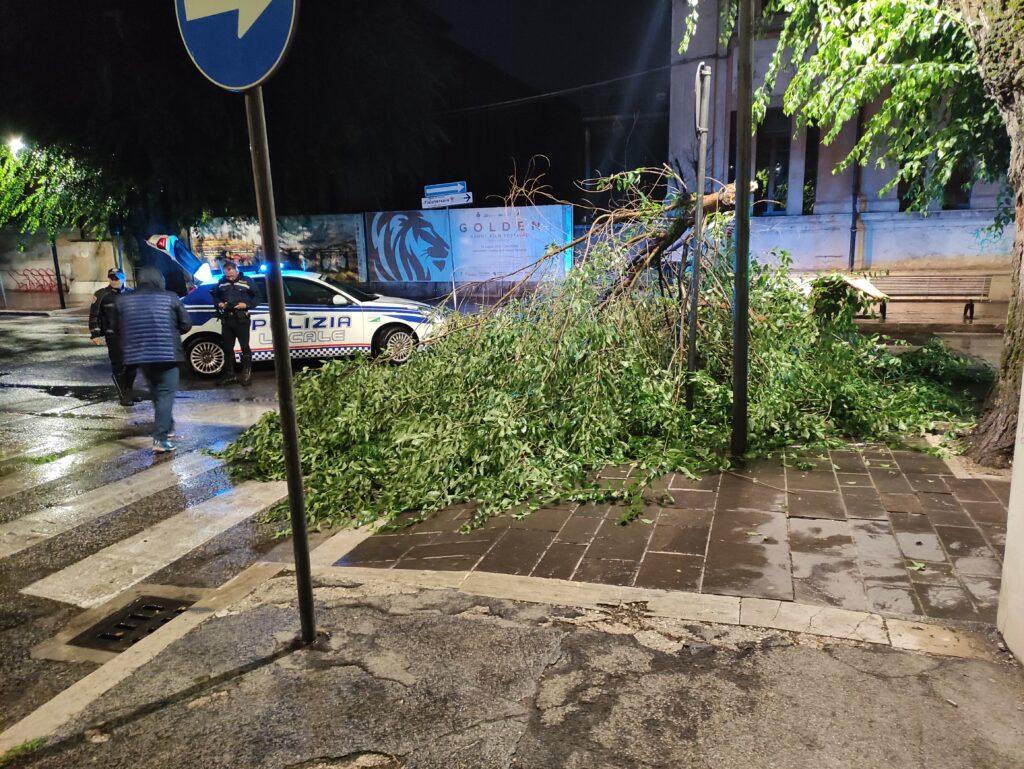Maltempo, caduto grosso ramo al centro di Avezzano