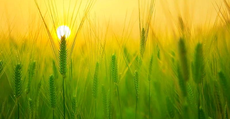 """Prodotti biologici e benessere animale, Imprudente: """"cambiano i pilastri della politica economico-agricola abruzzese"""""""