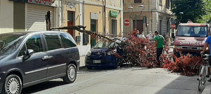 Albero si spezza e cade su un'auto nel centro di Avezzano
