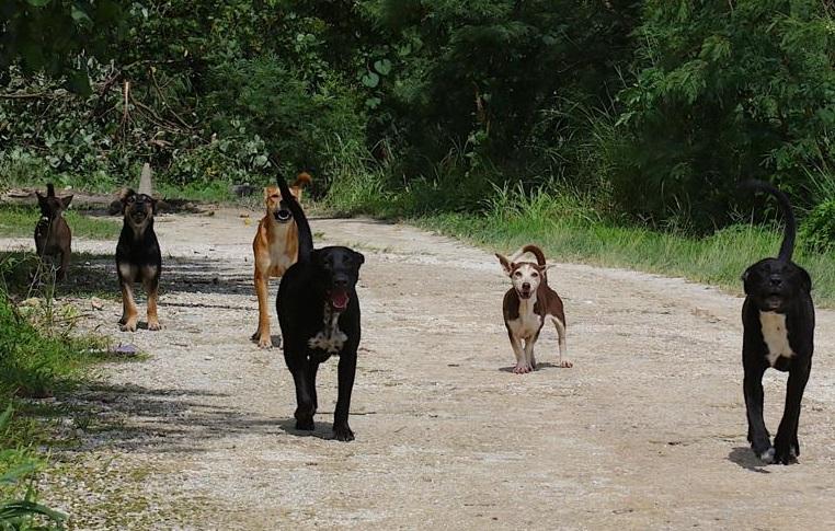 Cani randagi uccidono capriolo nel cimitero di Ovindoli