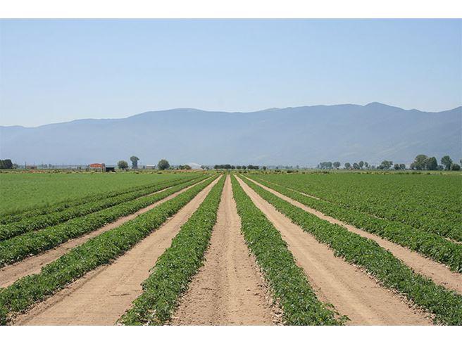 """Distretto Agroalimentare di Qualità """"Prodotti ortofrutticoli d'Abruzzo"""" rinnovo del Consiglio e approvazione del bilancio"""