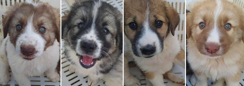 Ennesimo abbandono di animali a Trasacco: soccorsi sei cagnolini