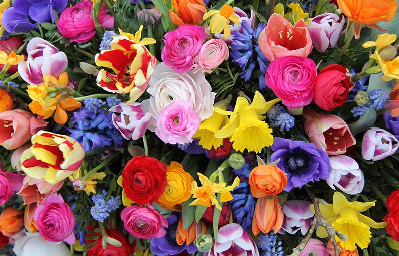 Ad Avezzano il 6 e il 7 luglio in piazza risorgimento con Affi e Federfiori coldiretti, un giardino temporaneo di fiori made in italY per ripartire dalla bellezza