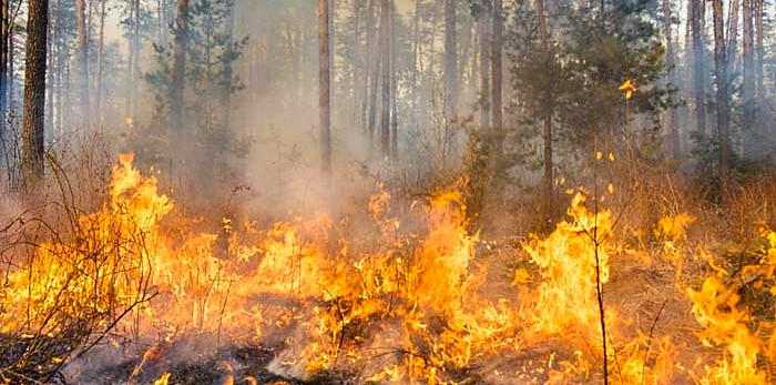 Campagna antincendio boschivo, gli uomini e i mezzi in campo in Abruzzo