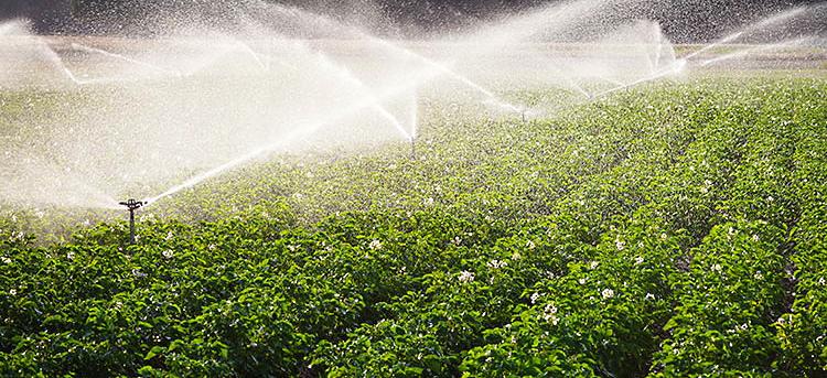 PSR Abruzzo: 6,5 milioni di euro alle imprese agricole abruzzesi per nuove tecnologie per l'irrigazione