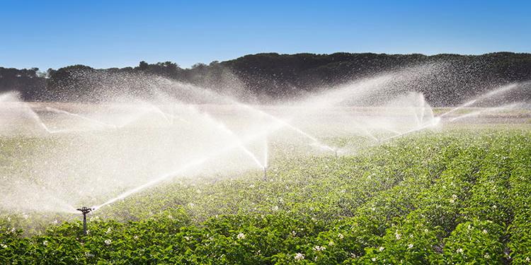 Miglioramento efficienza idrica, dalla Regione aiuti alle aziende agricole