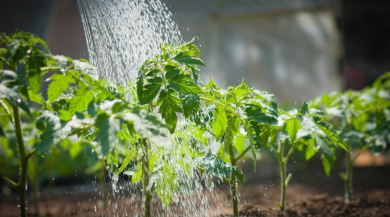 Controllo dell'acqua potabile a Canistro, il Sindaco vieta l'uso improprio nel periodo estivo