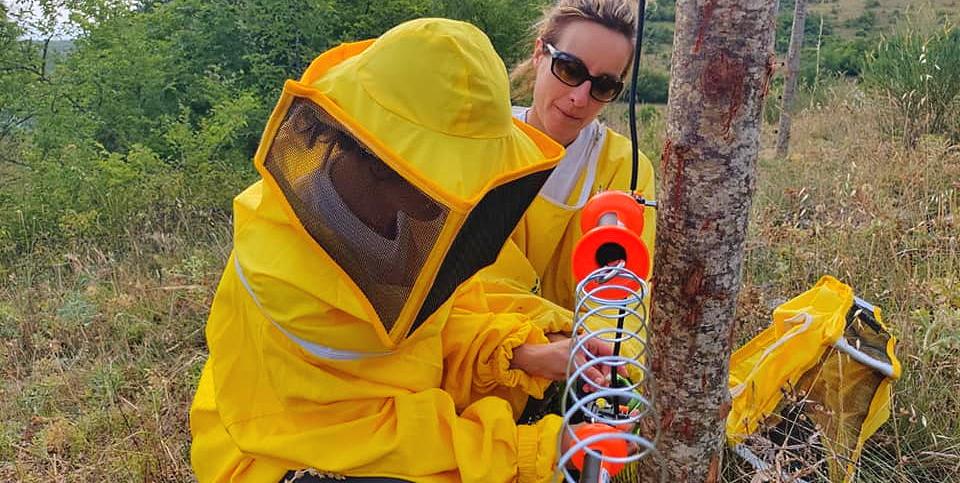 Incursioni dell'orso: installato recinto a protezione di apiari a Pescina